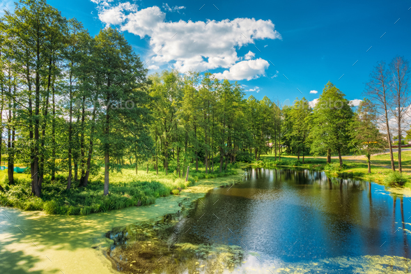 Scenic View Of Summer Sunny Forest Woods And Wild Bog. Nature. N - Stock Photo - Images