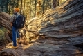 Sequoias National Park Hiker - PhotoDune Item for Sale