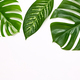 Creative Tropical Fresh Palm Leaves.Summer.Minimal - PhotoDune Item for Sale