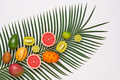 Tropical Fruits - PhotoDune Item for Sale