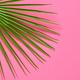 Tropical Fresh Fan Palm Leaf. Summer. Minimal - PhotoDune Item for Sale