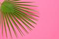 Fan Palm - PhotoDune Item for Sale