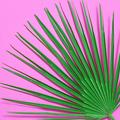 Palm Leaf - PhotoDune Item for Sale