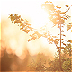Sunset Park Nature - VideoHive Item for Sale