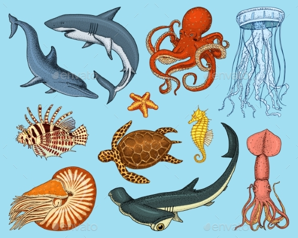 Fish or Sea Creature Set - Animals Characters