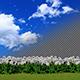 Dandelions Flying - VideoHive Item for Sale