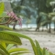 Frangipani Plumeria Flowers on Sunny Day, Palms Moving in Wind, Ocean on Background, Koh Lipe - VideoHive Item for Sale
