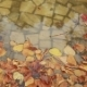Colorful Leaves in the Autumn in the Park - VideoHive Item for Sale