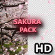 Sakura - VideoHive Item for Sale
