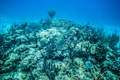 Coral Reef in San Andres Island. - PhotoDune Item for Sale