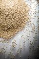 Pilsner Malt Beer Grain Heap on a White Table - PhotoDune Item for Sale
