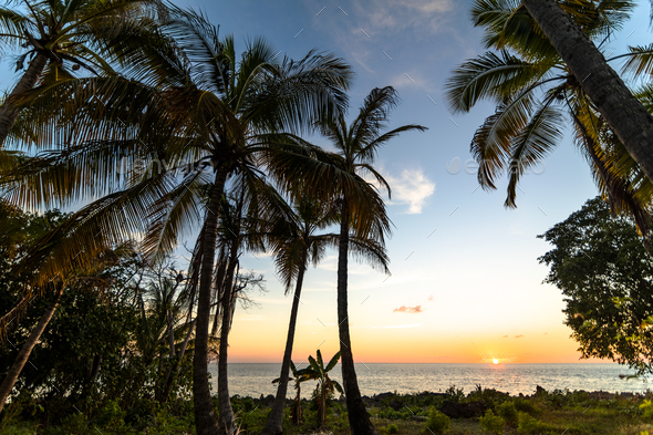 Exotic palms growing at seaside in Caribbean in sunset lights. - Stock Photo - Images