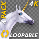 Unicorn - Gallop Loop - Pack of 4 - 4K - VideoHive Item for Sale