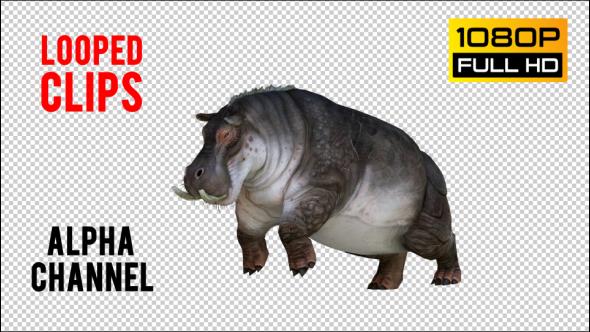 VideoHive Hippopotamus 1 Realistic Pack 5 21247712