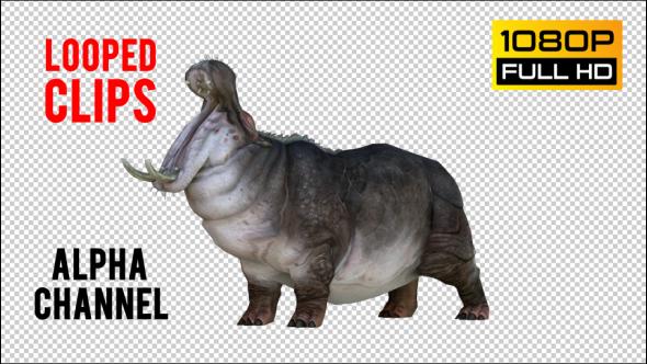 VideoHive Hippopotamus 2 Realistic Pack 5 21247747