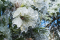 pine needles covered with ice - PhotoDune Item for Sale