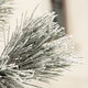 Pine branch in hoarfrost on a cold day - PhotoDune Item for Sale