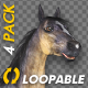 Grulla Horse - Gallop Loop - Pack of 4 - VideoHive Item for Sale