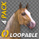 Palomino Horse - Gallop Loop - Pack of 4 - VideoHive Item for Sale
