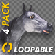 Gray Horse - Gallop Loop - Pack of 4 - VideoHive Item for Sale