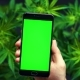 Smartphone with Green Screen for Сhroma Key, Chromakey Against the Background of Cannabis Flowers - VideoHive Item for Sale