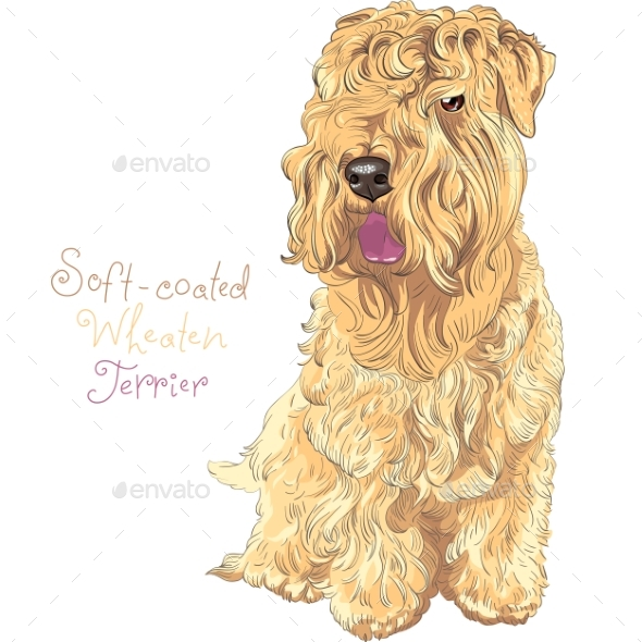 Soft-Coated Wheaten Terrier Dog - Animals Characters