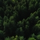 Green Forest Background - VideoHive Item for Sale