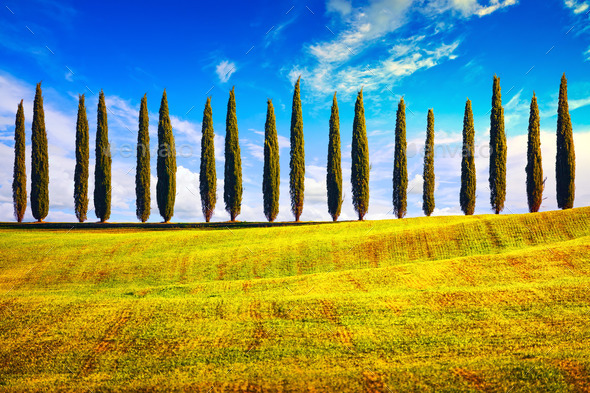 Tuscany, Cypress Trees row countryside landscape, Italy, Europe. - Stock Photo - Images