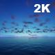 Sea Horizon - VideoHive Item for Sale