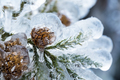 frozen pine cones closeup - PhotoDune Item for Sale
