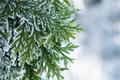 winter season background - PhotoDune Item for Sale
