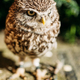 The small owl. Wild bird - PhotoDune Item for Sale