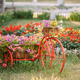 Decorative Vintage Model Old Bicycle Equipped Basket Flowers Gar - PhotoDune Item for Sale