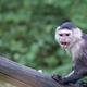 Monkey, a portrait  - PhotoDune Item for Sale