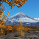 Colorful Autumnal Forest at Foot of Active Volcano on Kamchatka Peninsula - PhotoDune Item for Sale