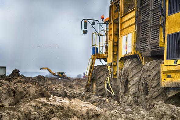 harvesting sugar beets - Stock Photo - Images