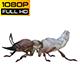 Isoptera Realistic Pack 4 - VideoHive Item for Sale