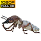 Isoptera 2 Realistic Pack 5 - VideoHive Item for Sale