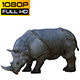 Rhino 2 Realistic Pack 4 - VideoHive Item for Sale