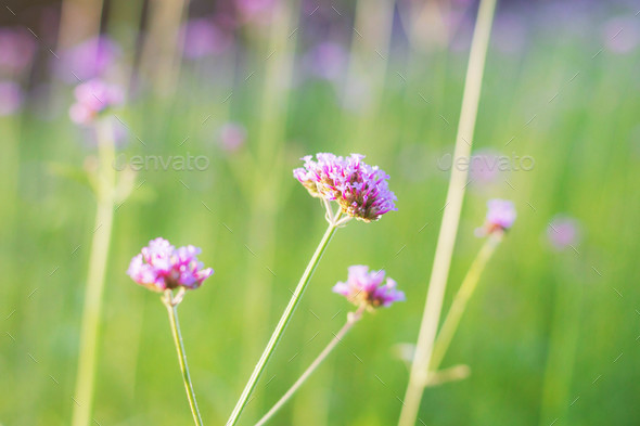 purple flowers with green nature - Stock Photo - Images