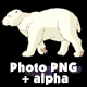 Polar Bear Walks - VideoHive Item for Sale