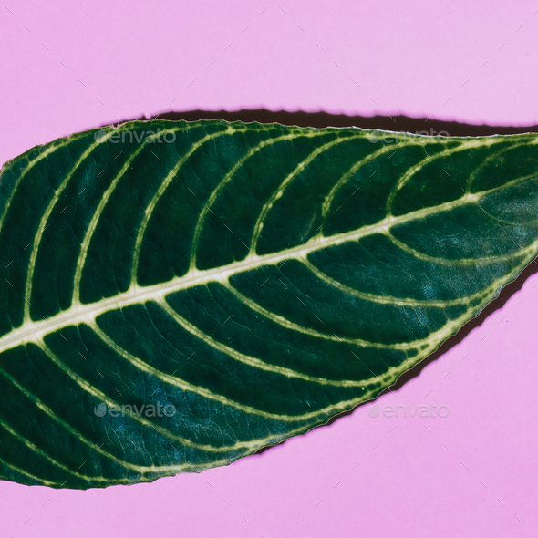 Tropical leaf on pink. Minimal fashion art - Stock Photo - Images