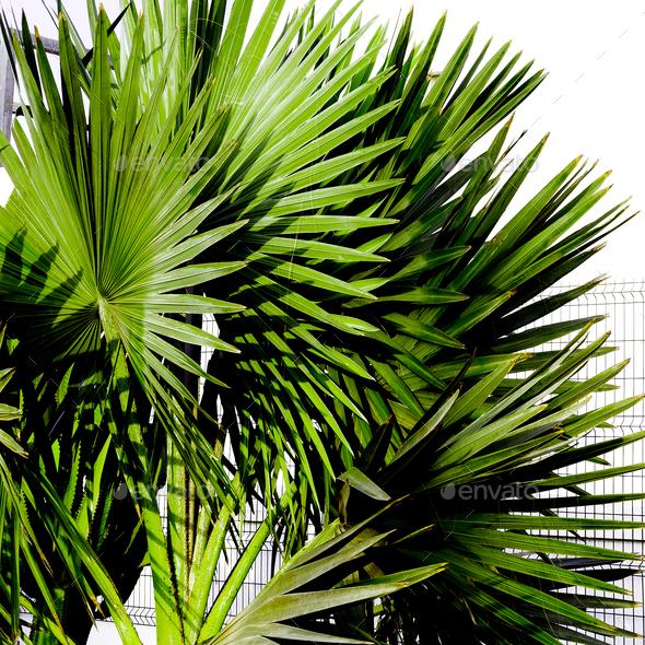 Palm tree Tropical Urban design minimal - Stock Photo - Images