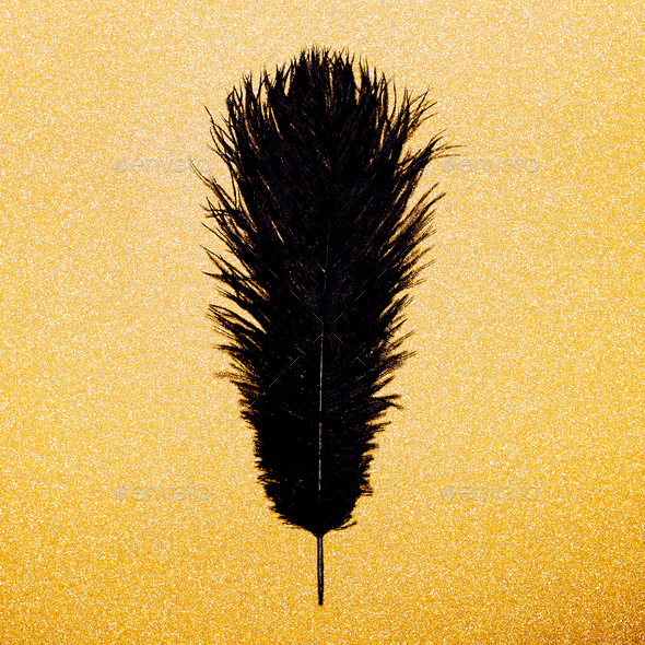 Black feather on a gold background. Minimal object - Stock Photo - Images