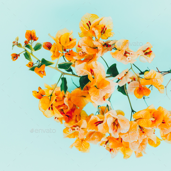 Yellow flowers. Tropical style. Minimal art - Stock Photo - Images
