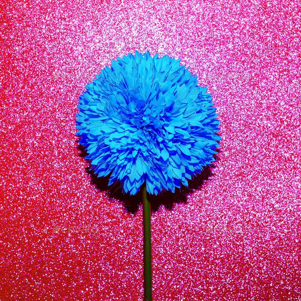 Blue flower and glitter. Minimal art - Stock Photo - Images