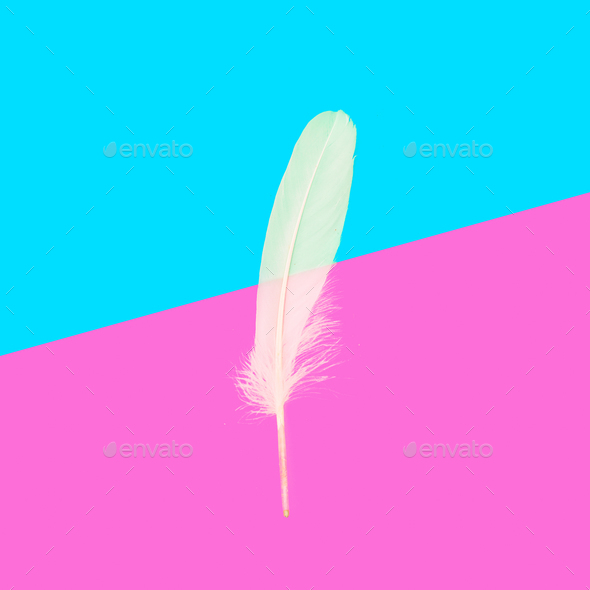 Feather Minimal art design stillife - Stock Photo - Images