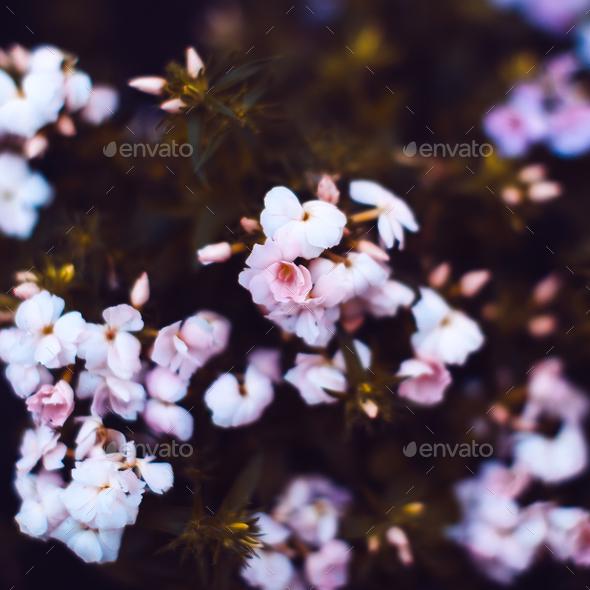 Beautiful flowers Background. Minimal style - Stock Photo - Images