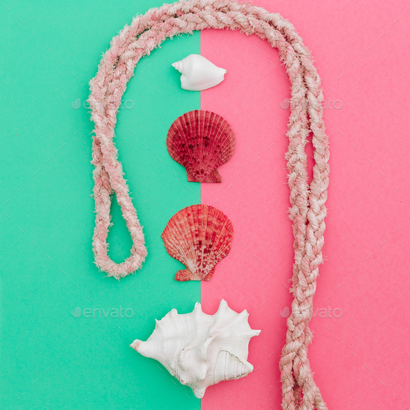 Set shells. Rope. Ocean style. Minimal art fashion design - Stock Photo - Images