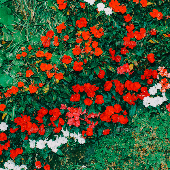 Red Flowers background Minimal art design - Stock Photo - Images